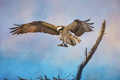 Photograph - Housekeeping Osprey Art by Jai Johnson