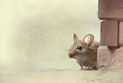 Mouse Mixed Media - housemouse Anneliese by Heike Hultsch