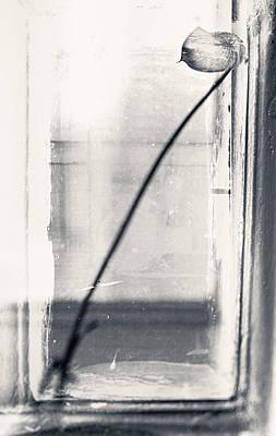 Photograph - Houseplant #5147 by Andrey Godyaykin