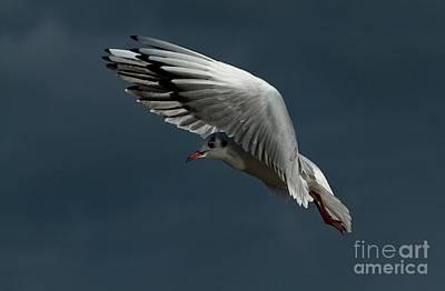 Photograph - Hover  by Gary Bridger