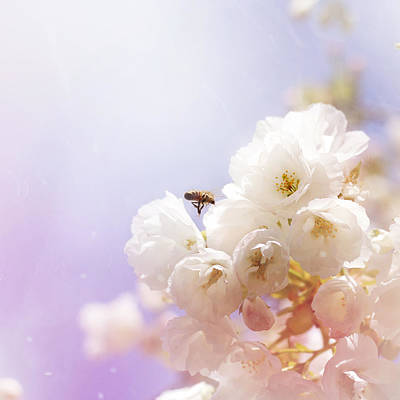 Photograph - Hovering Bee by Helga Novelli