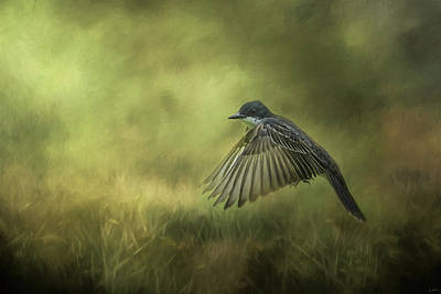 Kingbird Photograph - Hovering Eastern Kingbird In Flight Art by Jai Johnson