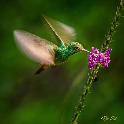 Photograph - Hovering For Breakfast by Rikk Flohr