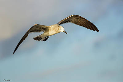 Photograph - Hovering Gull by Fran Gallogly