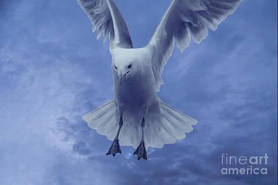 Stratford Photograph - Hovering Seagull No 1 by Linda Troski