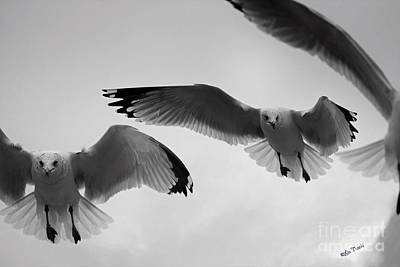 Stratford Photograph - Hovering Seagulls B And W by Linda Troski