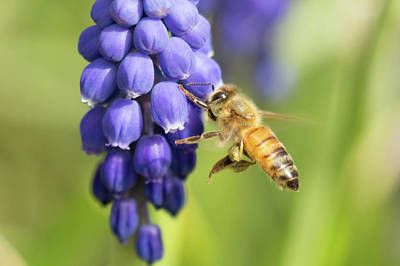 Photograph - Hovering Snack Break by Brian Hale