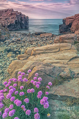 Photograph - Hovs Hallar Blooming Flowers by Antony McAulay