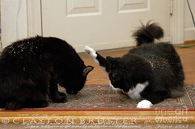 Photograph - How Cat Fights Start by Clayton Bruster