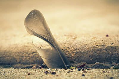 Photograph - How Did A Feather Get Stuck There? by Jeanette Fellows