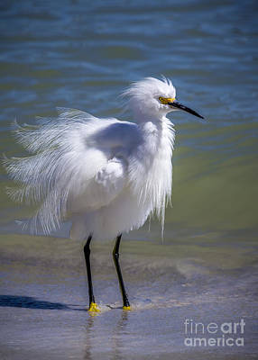 Egret Landscape Photograph - How Do I Look by Marvin Spates
