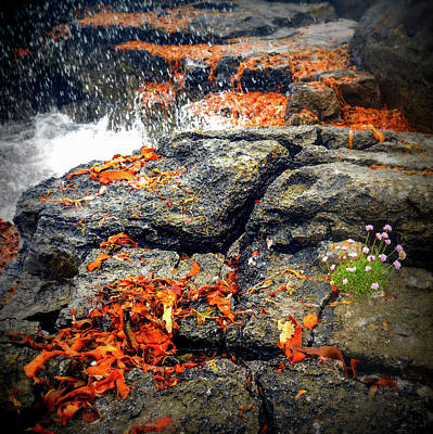 Photograph - How Do They Survive by Lexa Harpell