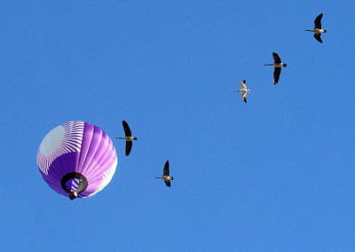 Hot Air Balloon Photograph - How High Can We Fly by Adrienne Wilson