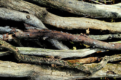 How Much Wood Would A Woodchuck Chuck Natural Wood Pile Ledge Park Wisconsin Art Print by Laura Pineda