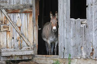 Photograph - Howdy by Donna Kennedy