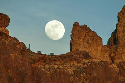 Photograph - Howling At The Moon II by Margaret Pitcher