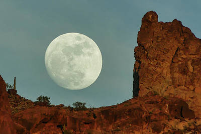 Photograph - Howling At The Moon by Margaret Pitcher