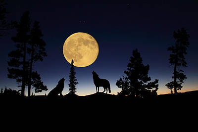 Night Photograph - Howling At The Moon by Shane Bechler