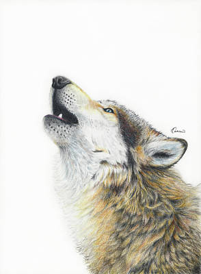 Wolves Drawing - Howling Wolf by Kathleen Wong