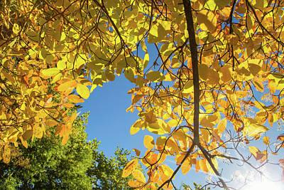 Photograph - Hoyt Arboretum Autumn Colors by Kunal Mehra