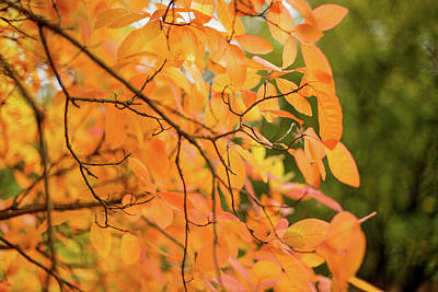 Photograph - Hoyt Arboretum Fall Colors by Kunal Mehra