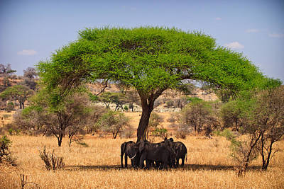 Elephant Photograph - Huddled In Shade by Adam Romanowicz