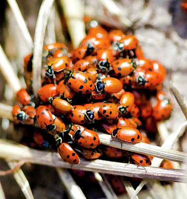 Huddling Beetles Original by Arthur Bohlmann