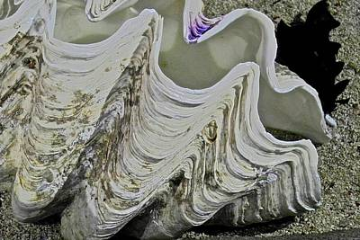 Photograph - Huge Clam Shell by Kirsten Giving