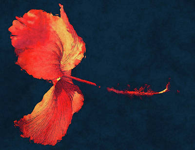 Digital Art - Huge Hibiscus Illustration by Georgiana Romanovna