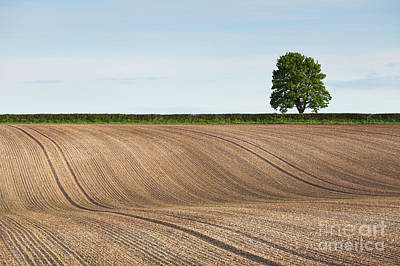 Photograph - Huggate Furrows by Gavin Dronfield