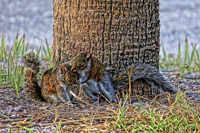 Photograph - Hugs And Kisses  by HH Photography of Florida