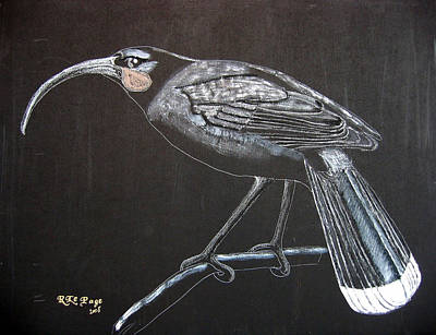 Painting - Huia by Richard Le Page