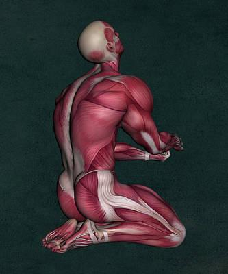 Human Anatomy 165 Art Print