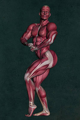 Mixed Media Royalty Free Images - Human Anatomy 21 Royalty-Free Image by Barroa Artworks