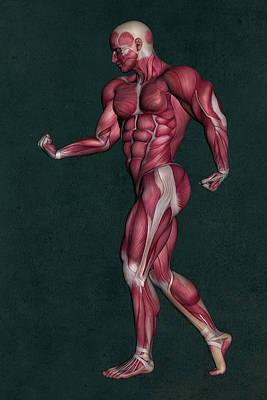 Cartoons Tees - Human Anatomy 26 by Barroa Artworks