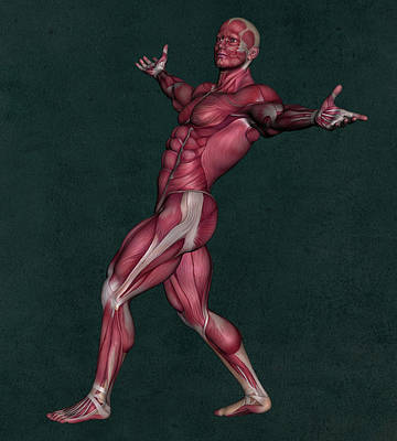 Mixed Media Royalty Free Images - Human Anatomy 65 Royalty-Free Image by Barroa Artworks