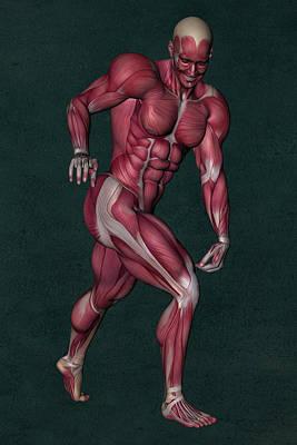 Human Anatomy 92 Art Print