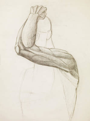 Hand Crafted Drawing - Human Arm Study, Pencil Sketch by Dan Comaniciu