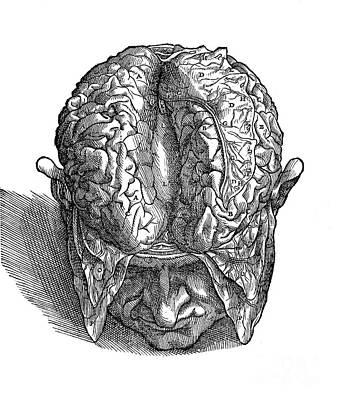 Intaglio Photograph - Human Brain, Vesalius, 16th Century by Wellcome Images