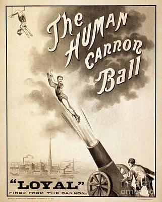 Drawing - Human Cannonball, C1879.  by Granger