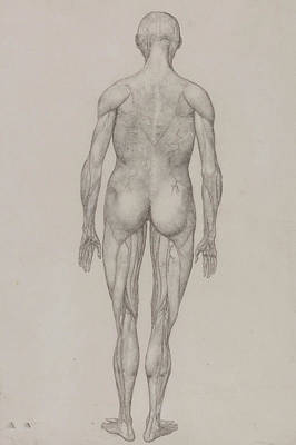 Drawing - Human Figure, Posterior View by George Stubbs