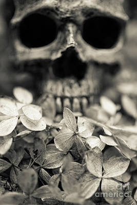 Photograph - Human Skull Among Flowers by Edward Fielding