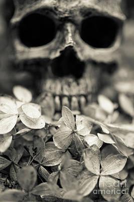 Photograph - Human Skull Among Flowers by Edward Fielding