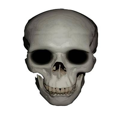 Digital Art - Human Skull Vector Isolated by Tracey Harrington-Simpson