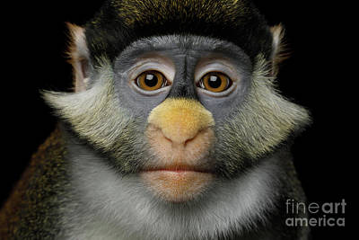 Photograph - Humanity Portrait Of Red-tailed Monkey by Sergey Taran