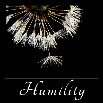 Print featuring the photograph Humility by Mary Jo Allen
