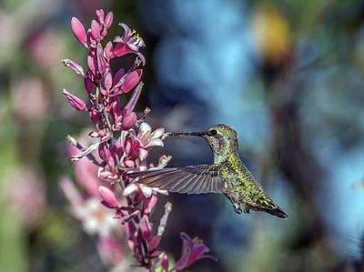 Photograph - Humingbird 1081 by Tam Ryan