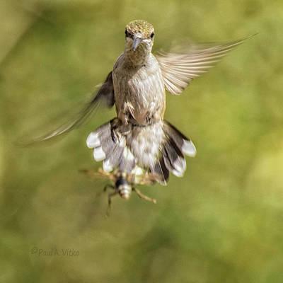 Photograph - Hummingbird And Wasp.... by Paul Vitko