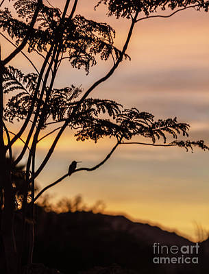 Photograph - Hummer Enjoying The Sunrise by Robert Bales