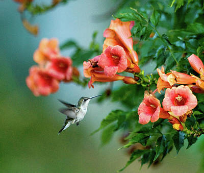 Photograph - Hummer by Gregory Blank
